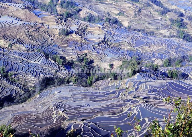 Yuanyang Bada Blue Flooded Rice Terraces