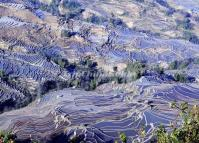 8-day Honghe Hani Rice Terraces Tour