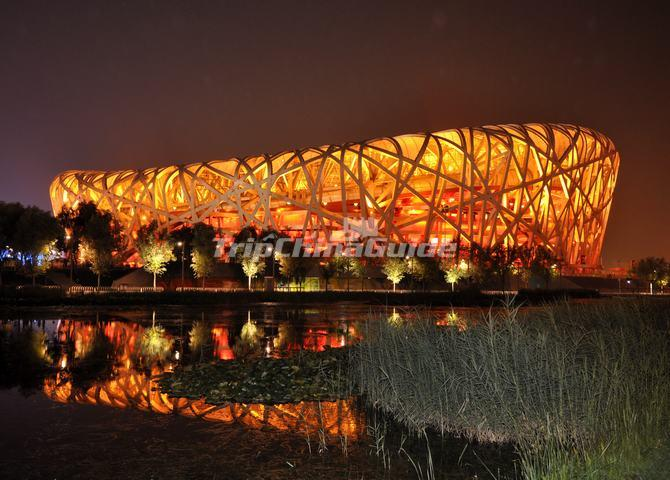 Birds nest stadium at night for Nest bird stadium