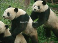 9-Day China Panda Tour for Students
