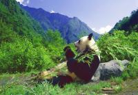 10-day Classical Sichuan Impression Tour