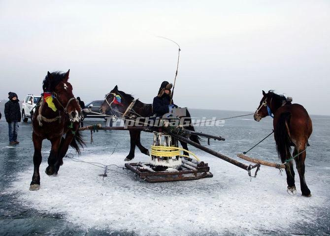 A Fisherman Order His Horses Bore a Ice Hole