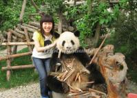 Photo with Panda in Chengdu