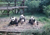 Chengdu Panda Research & Breeding Preserve