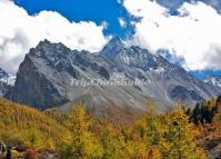 The Primitive Forest in Daocheng Yading