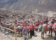 Rent Horse in Yading Daocheng