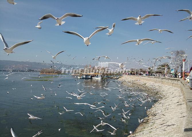 The Dian Lake In Kunming Dianchi Lake Kunming Dian Lake