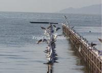 The Seagulls in Lake Dianchi China