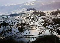 Charming Duoyishu Rice Terraces