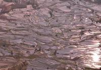 Yuanyang Duoyishu Rice Terraces