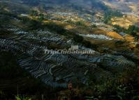 Spectacular Duoyishu Rice Terraces
