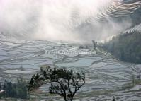 Attractive Duoyishu Rice Terraces