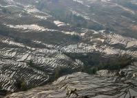 Abstract Pattern of Terraced Rice Fields in Duoyishu