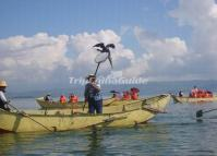 Cormmorant Fishing in Dali Erhai Lake