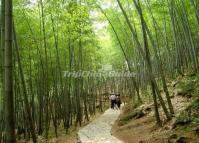 Feicui Valley Bamboo Trail Huangshan