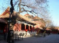 Hall of Spiritual Cultivation (Yangxing dian)