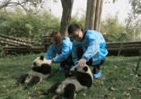 Tourists Visit Giant Pandas at Chengdu Research Base