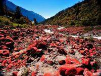 The Red Stone Patch in Hailuogou National Glacier Forest Park