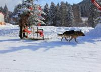 Dog Dledding  China's Snow Town