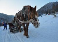 Sledding with Horses in China's Snow Town
