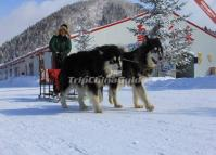 Sled Dogs at China's Snow Town