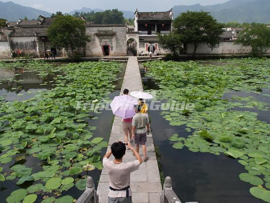 Hongcun Village Lotus