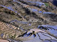 The Flooded Honghe Hani Rice Terraces