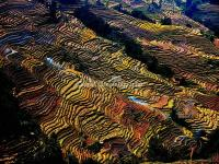 Honghe Hani Rice Terraces in Autumn
