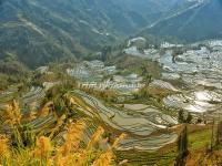 The Beatiful Hani Rice Terraces in Honghe Prefecture, Yunnan