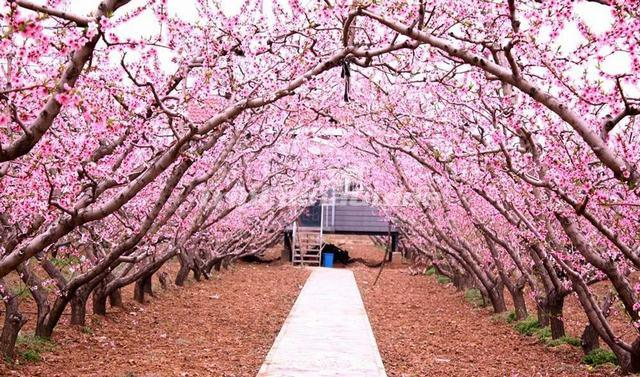Charming Land Of Peach Blossoms Hunan Photos Of Land Of