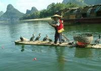 Cormorant Fishing on Li River Guilin