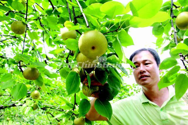 Liuyang Dawei Mountain Fruit Tourism Festival