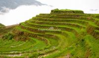 Longji Terraced Fields - Another Landscape of Guilin