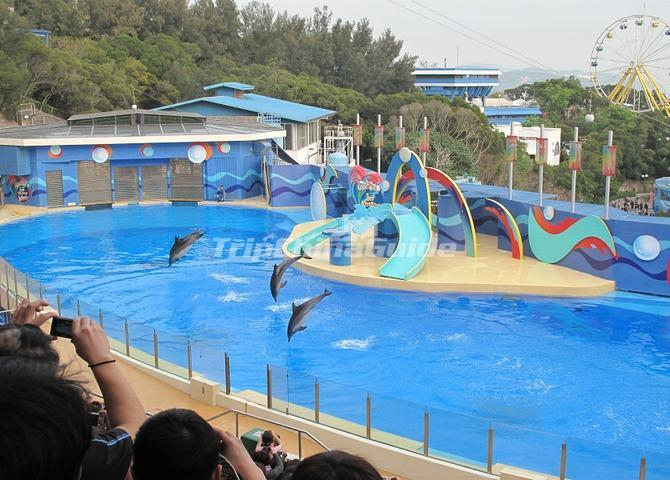 Ocean Park Dolphin Show - Hong Kong Ocean Park Photos