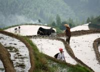 Flooded Longsheng Rice Terraces in May