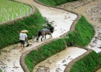 People Working in Longsheng Rice Terraces