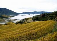 Beautiful Longji Rice Terrace Longsheng