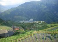 Longji Rice Terrace in May