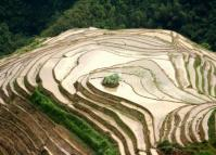 Longsheng Rice Terraces in Water
