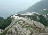 Longji Terraced Rice Fields China