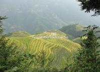 Rice Terrace Longsheng Guilin