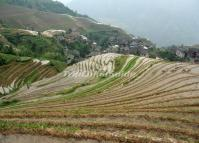 Pingan Longji Terraced Rice Fields