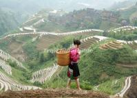 Longji Terraced Rice Fields and Local Girl