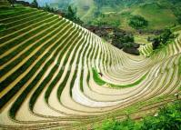 Attractive Longsheng Rice Terrace