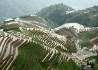 Longji Terraced Rice Fields April