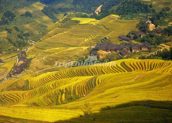 Longji rice terrace in october longsheng ping 39 an village for Terraces opening times