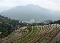 Longsheng Rice Terraces in China