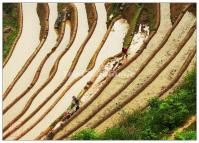 Beautiful Longsheng Rice Terraces