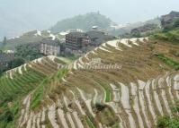 Longji Terraced Rice Fields Water