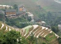 Longji Terraced Rice Fields in Pingan Village